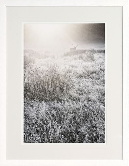 Picture of Mystical Morning Mist II