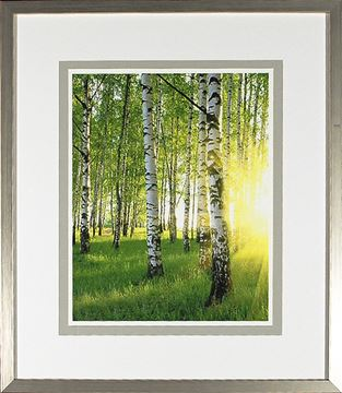 Picture of Birch Study Lime III