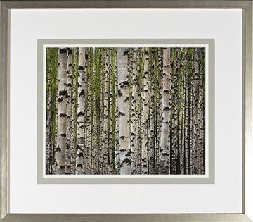 Picture of Birch Study Lime IV