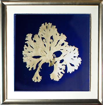 Picture of Seaweed On Navy IV