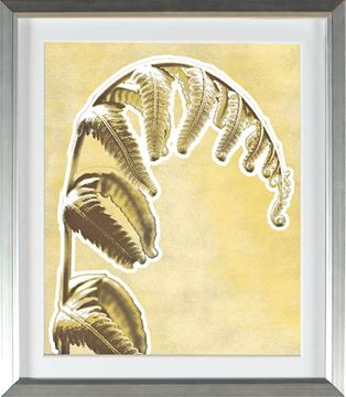 Picture of Honey Gold - Weeping Frond