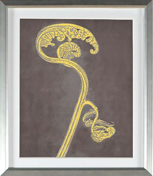 Picture of Honey Gold - Fiddlehead (Large)