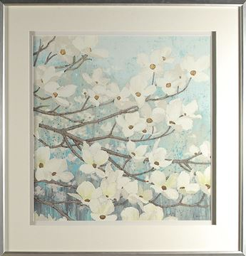 Picture of Dogwood Blossoms II