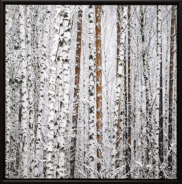 Picture of Barred Birches - Framed Canvas