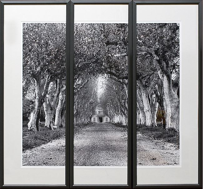 Picture of Colonnade Of Trees S/3 Triptych
