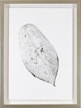 Picture of Silver Leaves II