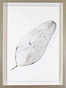 Picture of Silver Leaves III