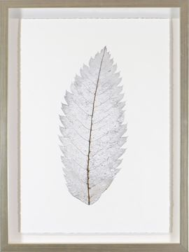Picture of Silver Leaves IV