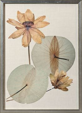 Picture of Herbarium Pressings V