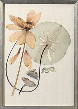 Picture of Herbarium Pressings VI