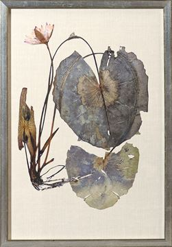 Picture of Herbarium Pressings VII