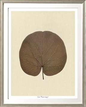 Picture of Cocoa Round Leaf I Sml