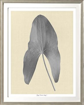 Picture of Grey Araceae Leaf I Sml