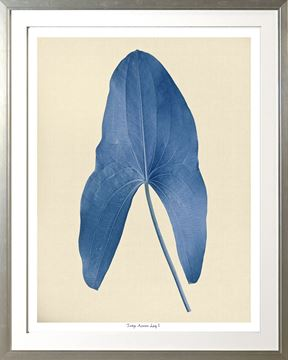 Picture of Indigo Araceae Leaf I Lge