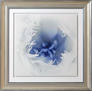 Picture of Blue Focus, Floral III - A