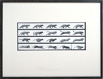 Picture of Muybridge - Cat