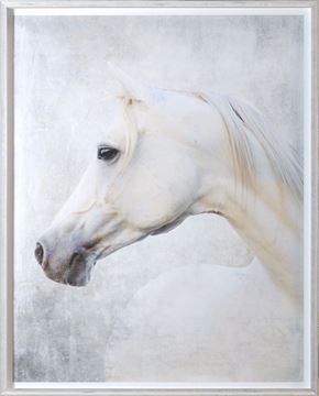 Picture of White Arabian