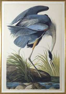 Picture of Blue Heron