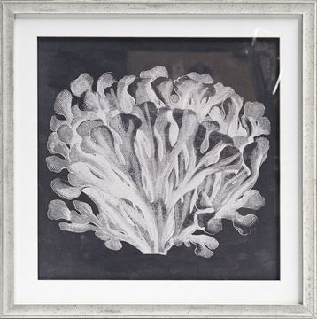 Picture of Azure Coral III