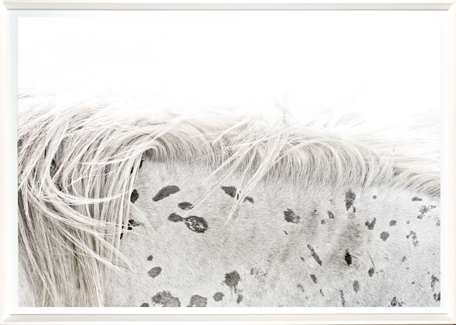 Picture of Appaloosa Detail