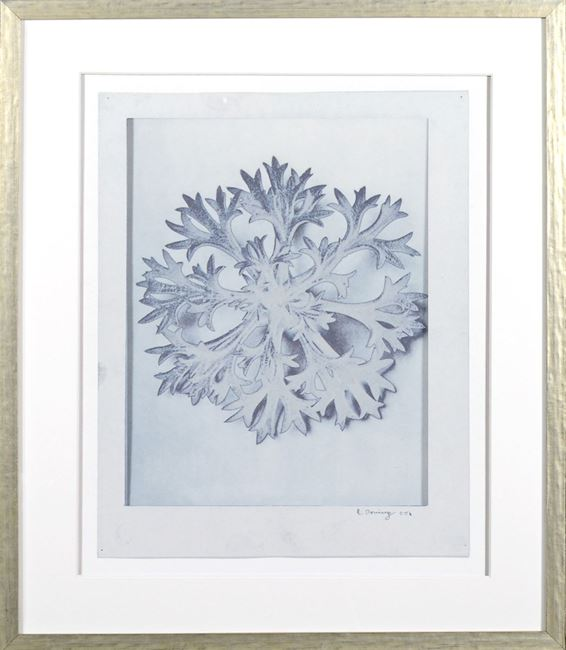 Picture of Blossfeldt Plant Study II - Large
