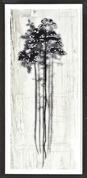 Picture of Coniferous Overlay I- Small
