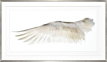 Picture of Wings Of A Feather I- Left