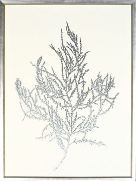 Picture of Silver Foil Algae III