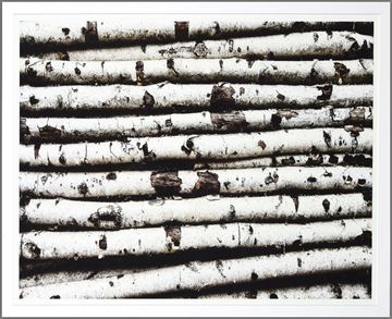 Picture of Birch Abstract II - Lrg