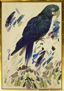 Picture of Lear - Blue Parrot - Lrg