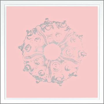 Picture of Sea Urchin Pink - Silver