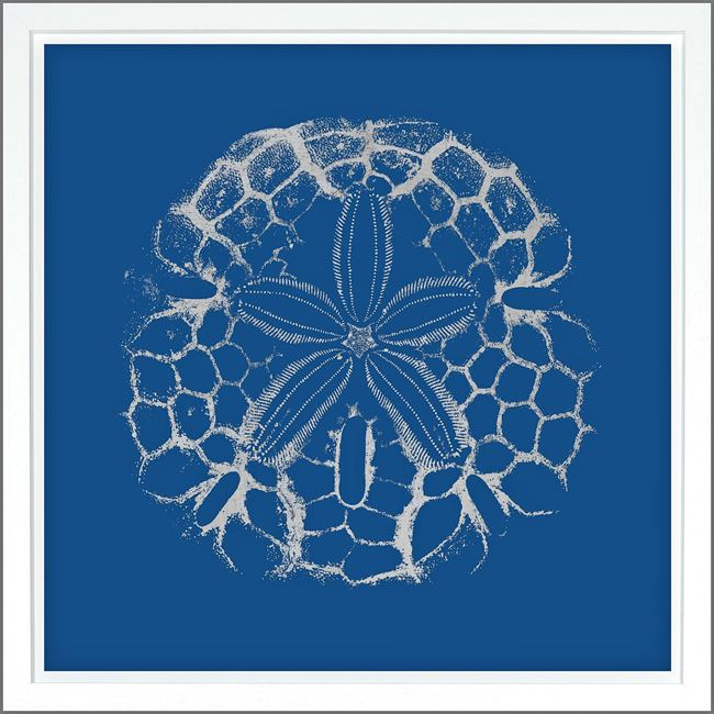 Picture of Sand Dollar Dk Blue - Silver