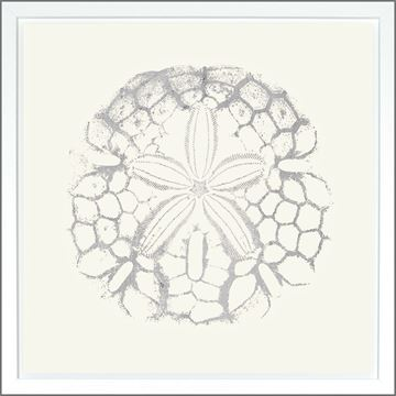 Picture of Sand Dollar Ivory - Silver