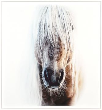 Picture of Palomino