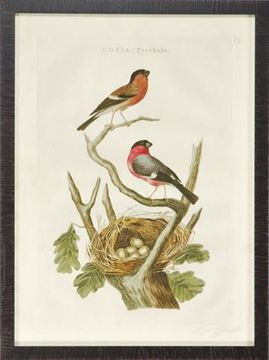 Picture of Nozeman Birds & Nests I