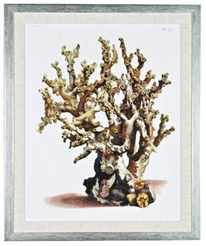 Picture of Antique Coral II