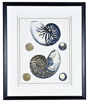Picture of Antique Blue Nautilus