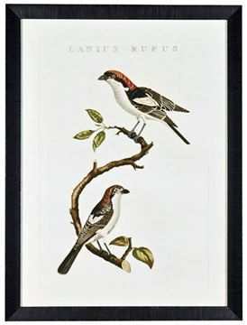 Picture of Nozeman Birds I