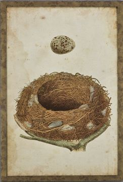 Picture of Bird's Nest Study I