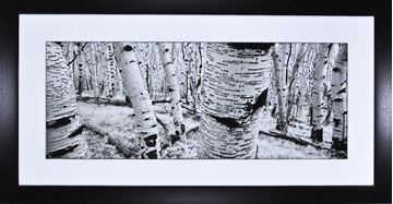 Picture of The Birches