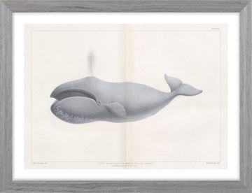 Picture of Vintage Whale Series II