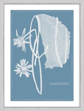 Picture of Cyanotype Water Lilies I