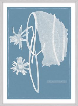 Picture of Cyanotype Water Lilies I - Large