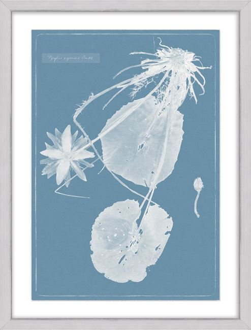 Picture of Cyanotype Water Lilies III