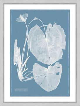 Picture of Cyanotype Water Lilies IV