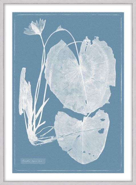 Picture of Cyanotype Water Lilies IV - Large