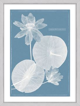 Picture of Cyanotype Water Lilies VI