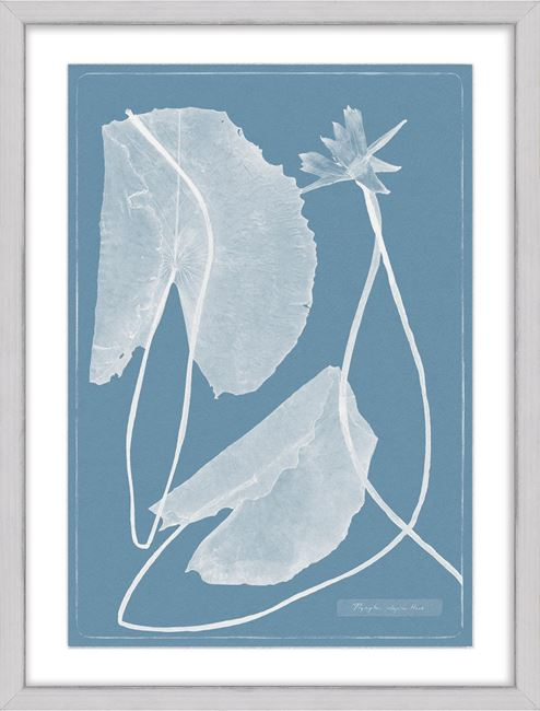 Picture of Cyanotype Water Lilies VII