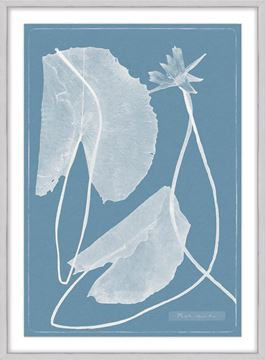 Picture of Cyanotype Water Lilies VII - Large