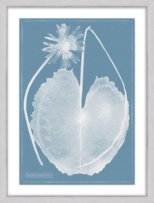 Picture of Cyanotype Water Lilies VIII